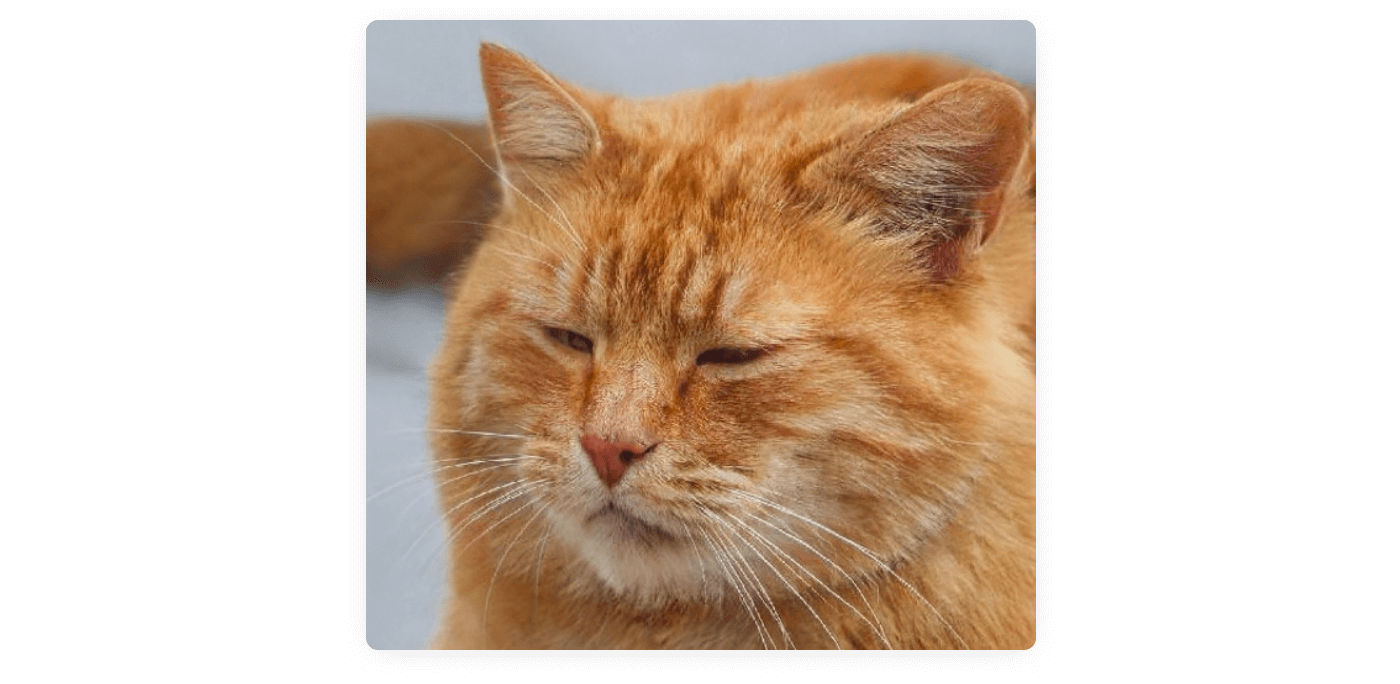 An AI generated cat