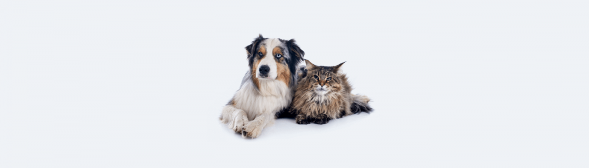 Trending eCommerce products - pet accessories